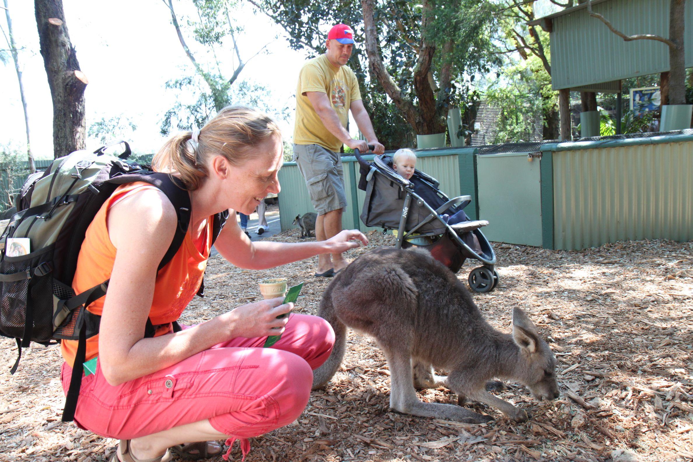 Austrálie, klokan
